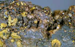Зараженность золотой минерализацией железорудных месторождений Курской магнитной аномалии (КМА)